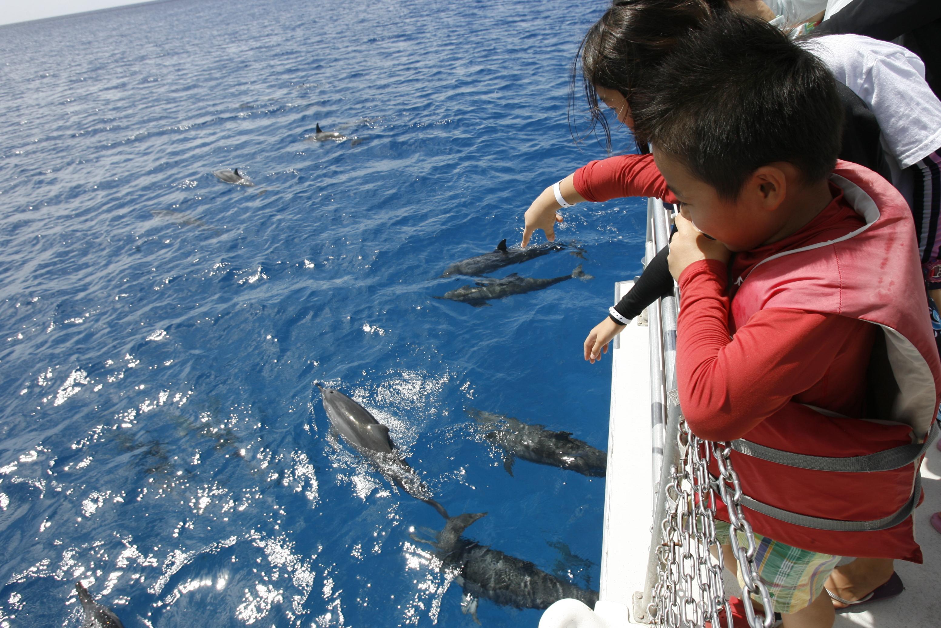 イルカの出現に大興奮の子供達。目の前すぐそばに大群が現れることもたびたび