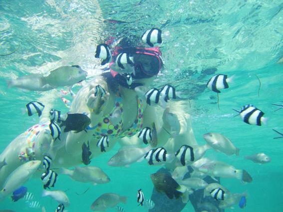 ガイド付きなら熱帯魚や珊瑚のポイントに案内してくれる