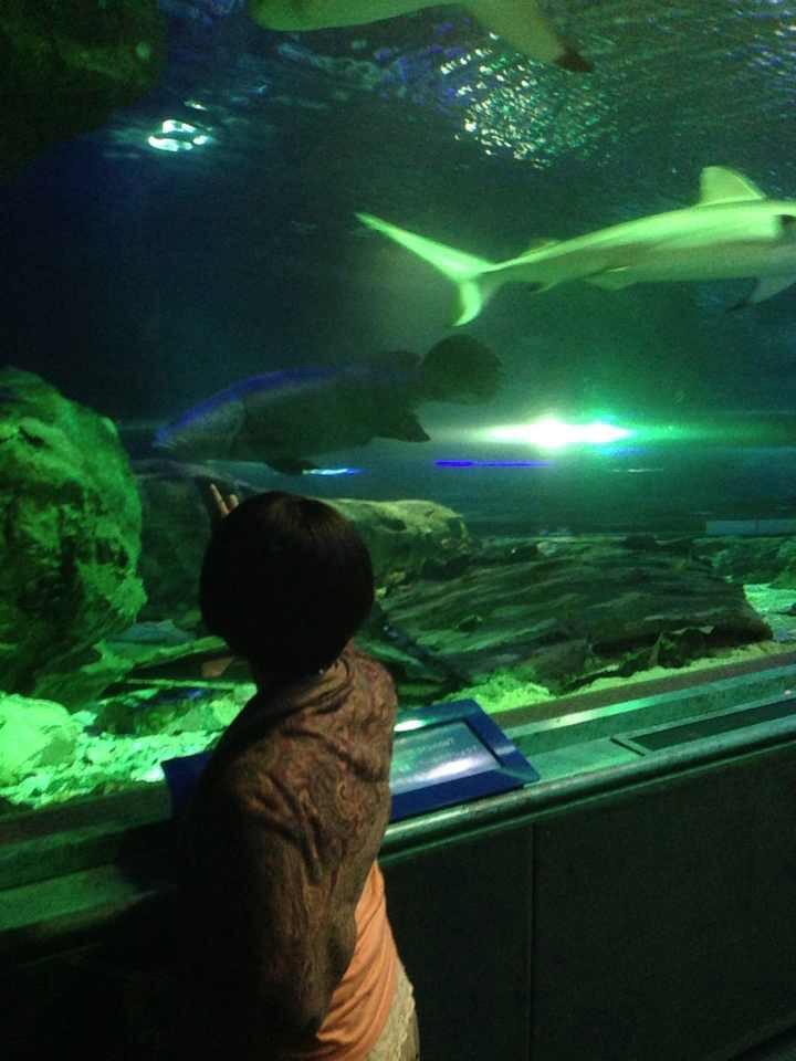 食事や買い物の帰りに水族館にちょっと立ち寄れるなんて、グアムならでは。空き時間を利用して訪れたいプレジャーアイランドの癒しスポット。